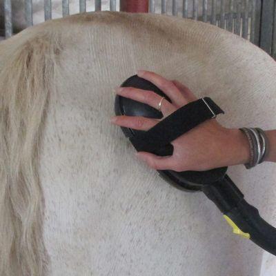 pferdestriegel-detail-1